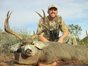 West Texas Desert Mule Deer